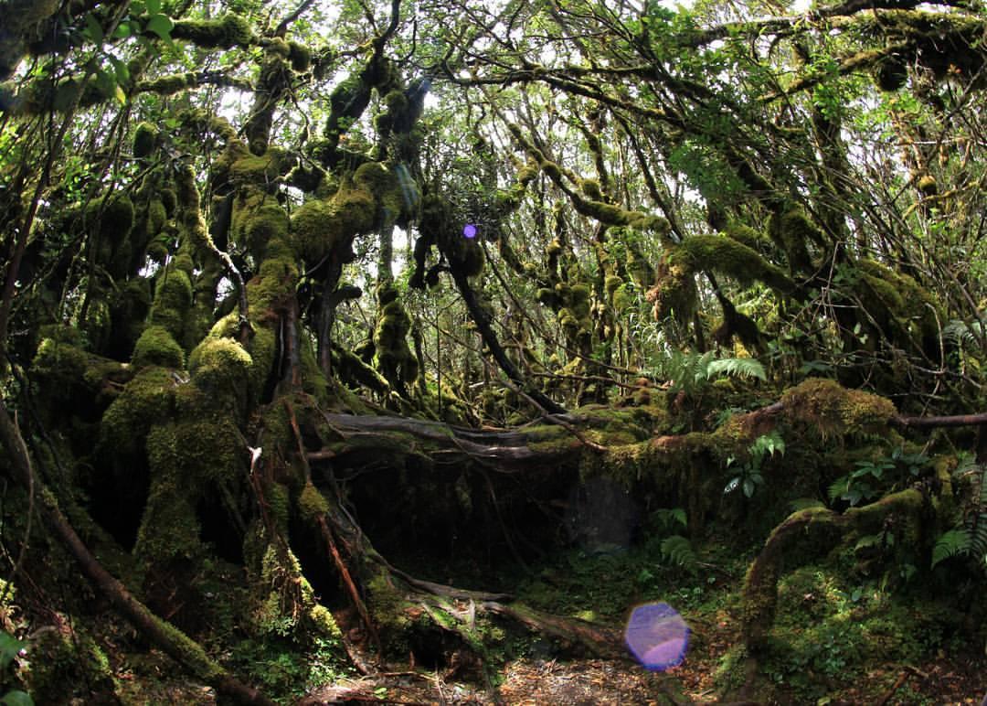 hutan-lumut-singgalang